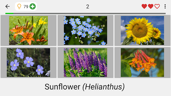Download Flowers - Botanical Quiz about Beautiful Plants 3.1.0 Apk for android