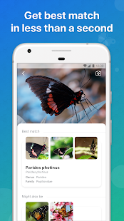 Download Picture Insect - Bug Identifier 2.0 Apk for android