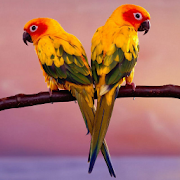 Download Birds Jigsaw Puzzles 2.10.9 Apk for android