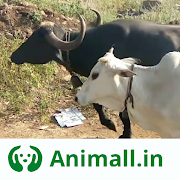 Download गाय भैंस wala पशुमेला - Animall app 1.9.4 Apk for android
