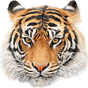 Download Animal Sounds 5.0.16 Apk for android